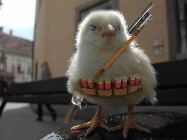 Chick with Guns