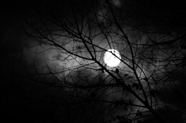 Goodnight Moon 5