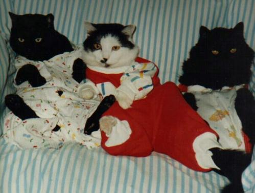 Cats in Pajamas